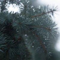 Волшебство на зиму :: Dmitriy Izotov
