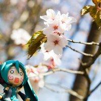 Японская весна :: Dmitriy Izotov