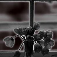 tulipany w Krakowie .... :: Носов Юрий