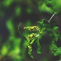 Природа оживает :: Nina Zhafirova
