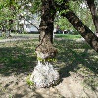 Фигуристое дерево. :: Мила