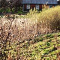 домик в деревне :: Анастасия Ковальчик
