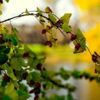 Осенняя ветка :: Владимир Павленко