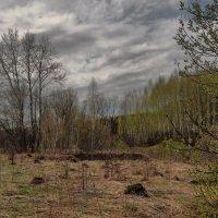 Зеленая дымка :: Владимир Макаров