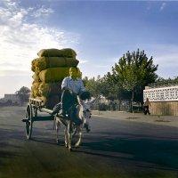 Утро в Ташкенте :: Валерий Талашов