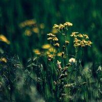 Flowers :: Алексей Сулименко