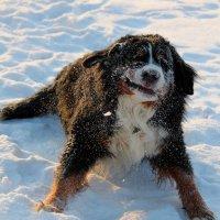собачье счастье :: Светлана Карпенко