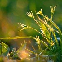 В лучах заходящего солнца :: Дмитрий Юрков