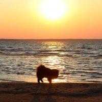 Черный пес,бегущий краем моря... :: Рустам Илалов