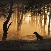 Пёсик в тумане... :: Александр