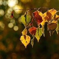 Краски осени :: Алексей Окунеев