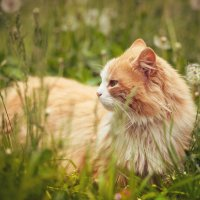 Мой кот Барсик :: Алеся Гурьева