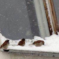 Нежданный майский снегопад :: Елена Перевозникова
