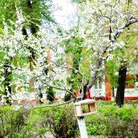 Дерево в цветах с кормушкой :: Татьяна Олифер