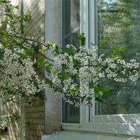 Весна стучится в окно. :: Юрий Шувалов