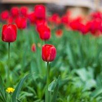 Весенние краски :: Евгения О