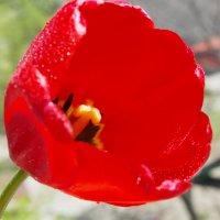 Весна :: татьяна Токмачева