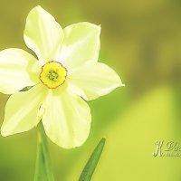 Самовлюблённый цветок :: Вадим Куликов