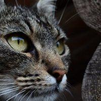 cat :: Валерия Сыч