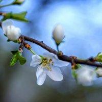 Весна :: Игорь Иванов