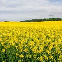 Желтое море :: Владимир Горубин