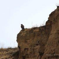 редкая птица :: василиса косовская