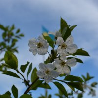 Весна :: lara Bondarchuk