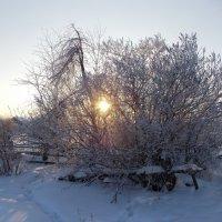 ...зимняя тоска :: Sergey Raspopov