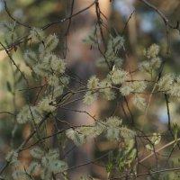 Весна в Сибири :: Михаил Фролов