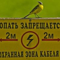ЖЁЛТАЯ ТРЯСОГУЗКА ПРЕДУПРЕЖДАЕТ! :: Юрий