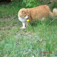 просто кошка :: МИХАИЛ КАТАРЖИН