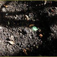 Листик зелёный, такой вот хороший, всё хочет, упрямо, вернуть что-то вспять. :: Ольга Кривых