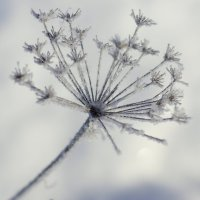 Зимний :: Ирина Крохмаль
