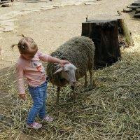 Ника и овечка Доли :: Владимир Бровко