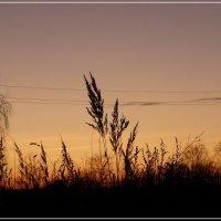 Травушка на закате :: Валерий Викторович РОГАНОВ-АРЫССКИЙ