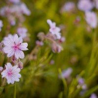 Весна :: наталья Дубовая