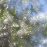 ...весна.... :: Андрей Гр