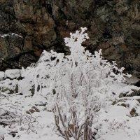 Начало зимы :: Ольга Иргит