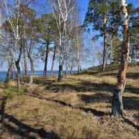 Прогулки по майскому лесу. :: Сергей Адигамов