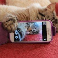 Вот такой у меня кот.. :: Евгения Досина