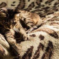 Кошачье утро :: Chooo Сhoo0