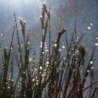 Чудеса в траве! :: Юлия Пахомова