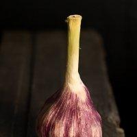 Garlic :: Katie Voskresenskaia
