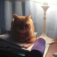 Книжный кот :: Николай Варсеев
