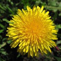 Весеннее солнышко... :: Анна :)