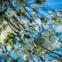 Весна :: iojik48 iojik48