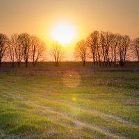 Солнце :: Евгения Порядина