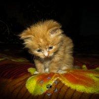 Кошка :: Іван Вішован