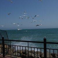 Бушующие море и чайки :: Nastya Bykova