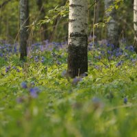 весна в Новосибирске :: Михаил Фролов